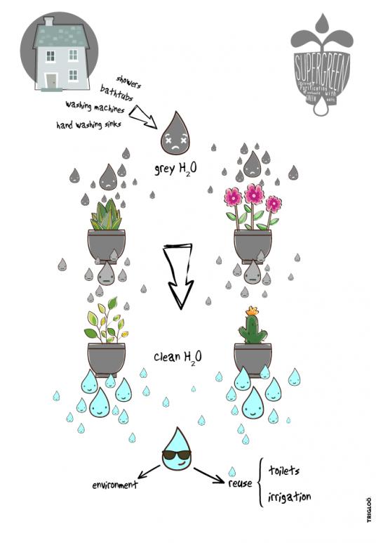 Opportunit per i ricercatori muri vegetali per depurare l acqua - Depurare l acqua di casa ...